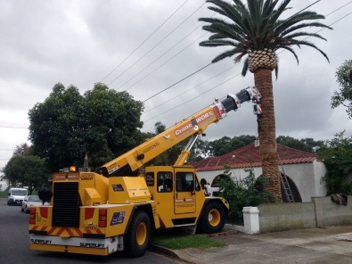 Palm Tree Relocation